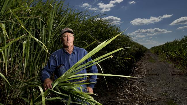Northern Gold Coast cane fields on market to build vast new city